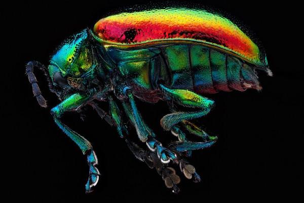 besouro_macrofoto Os detalhes coloridos dos insetos Fotografia Papo de Praga