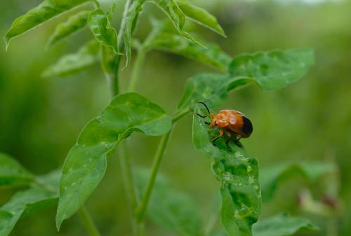 inseto_folha_shutterstock Os insetos, as folhas das árvores e o outono Curiosidades