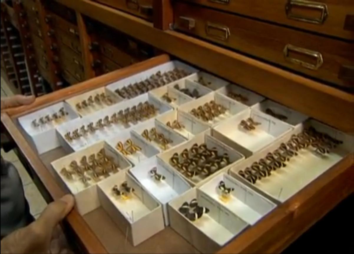 mariposas_colecao Maior coleção de mariposas do mundo é brasileira Papo de Praga