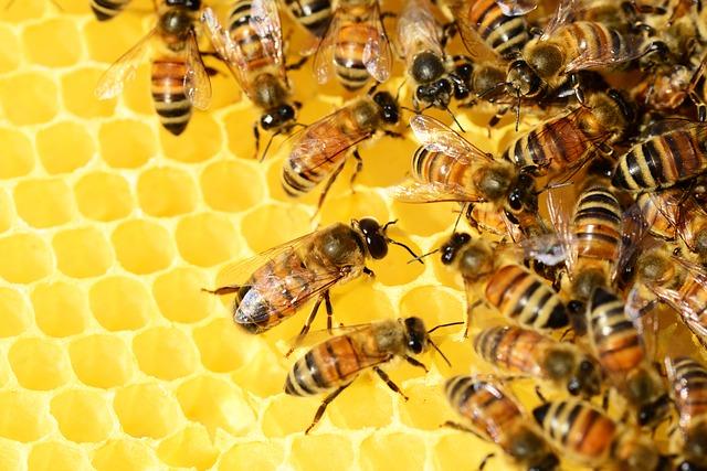 abelhas_colmeia O trabalho das abelhas Curiosidades
