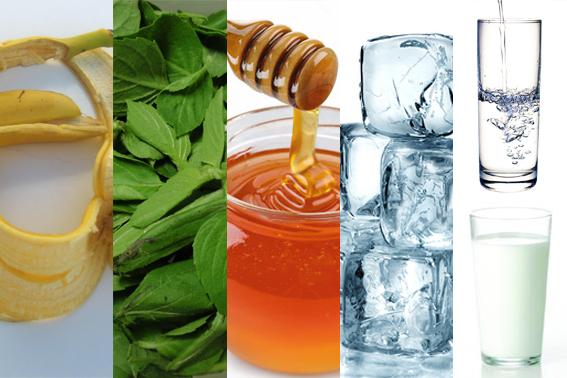 dicas_picadas_insetos Remédios naturais podem aliviar picadas de insetos Dicas