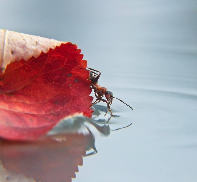 mishchenko-formiga Fotografias de caracóis e insetos encantam e fogem do tradicional Papo de Praga