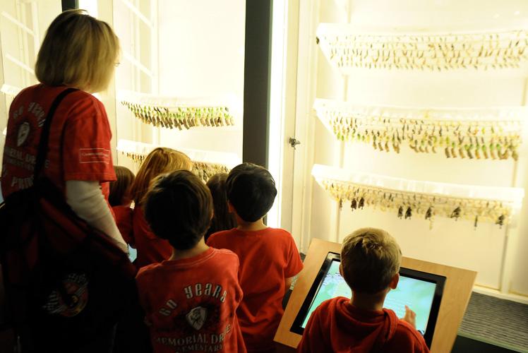 museu_insetos_borboletas-no-casulo Museu americano tem exposição permanente de insetos Papo de Praga