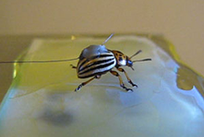 superficie_anti-inseto Pesquisadores alemães inventam revestimento anti-insetos Curiosidades Dedetização Notícias Prevenções
