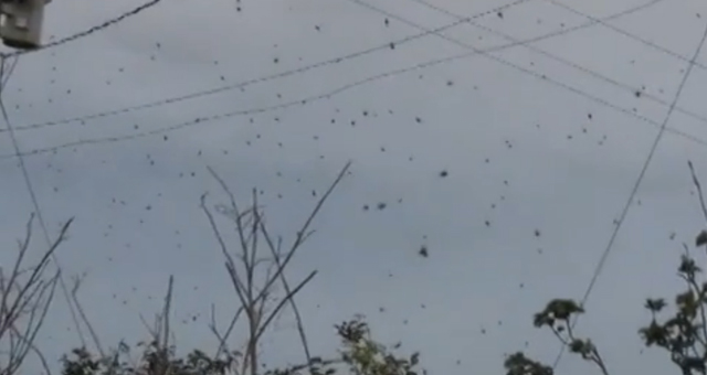 chuva_aranhas Chuva de aranhas: ficção ou vida real? Papo de Praga