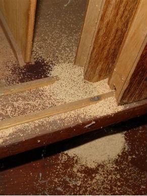 cupins_madeira Como acabar com a infestação de cupins? Descupinização Perguntas ao Especialista