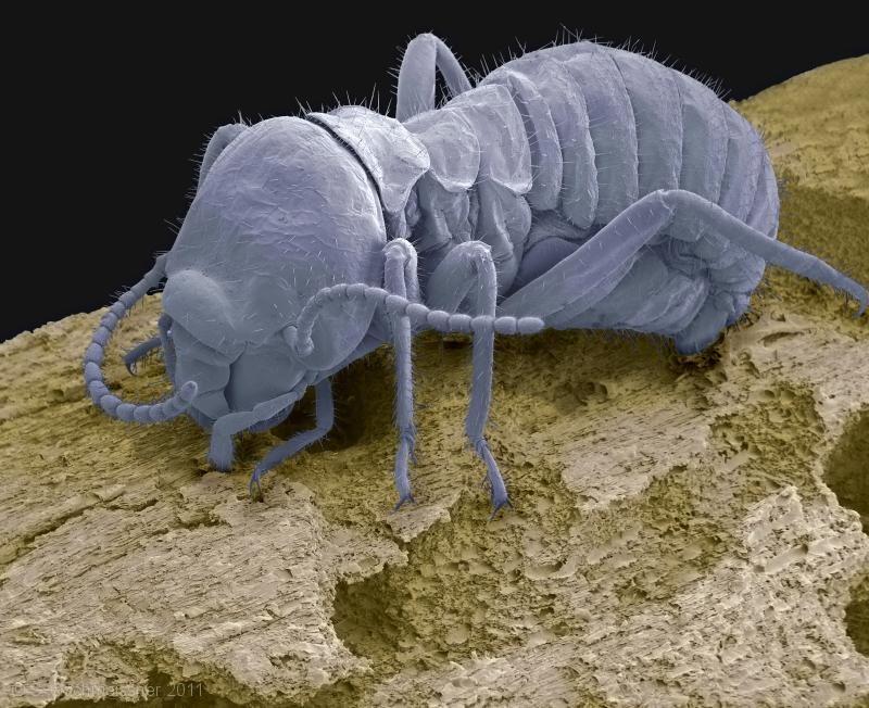 cupim Imagens surpreendentes revelam o mundo microscópico dos insetos Fotografia Papo de Praga