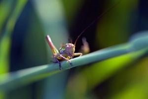 30115119688311-300x200 Você sabia que insetos também sofrem por causa do stress? Pragas