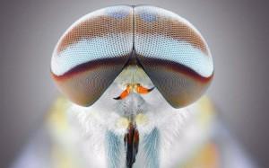 fhorsefly-450x281-300x187 Fotógrafo registra impressionantes fotos macros do rosto de insetos Pragas