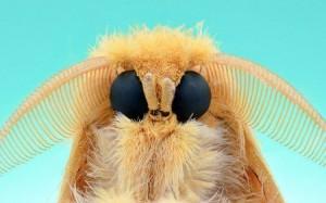 moth-450x281-300x187 Fotógrafo registra impressionantes fotos macros do rosto de insetos Pragas