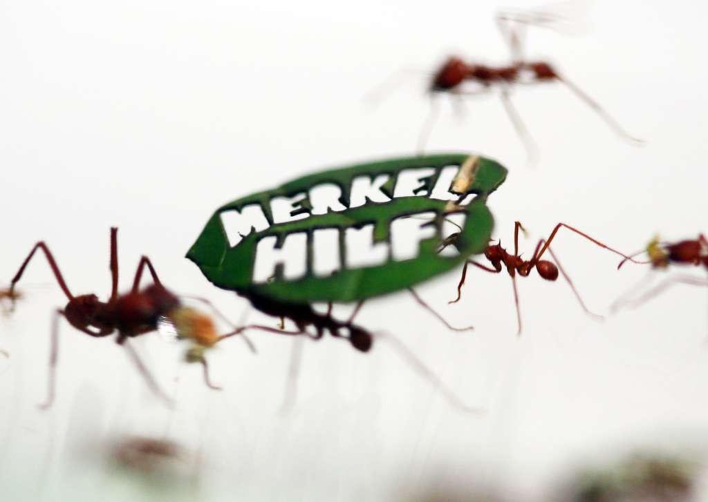 182285_1-1024x727 ONG utiliza formigas em protesto para proteção da Amazônia Notícias