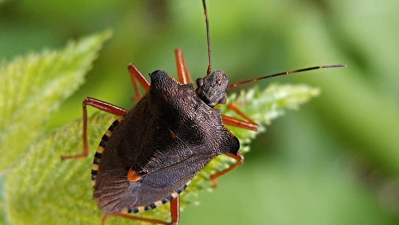 bug-111229_1280 6 animais amigos da horta Perguntas ao Especialista