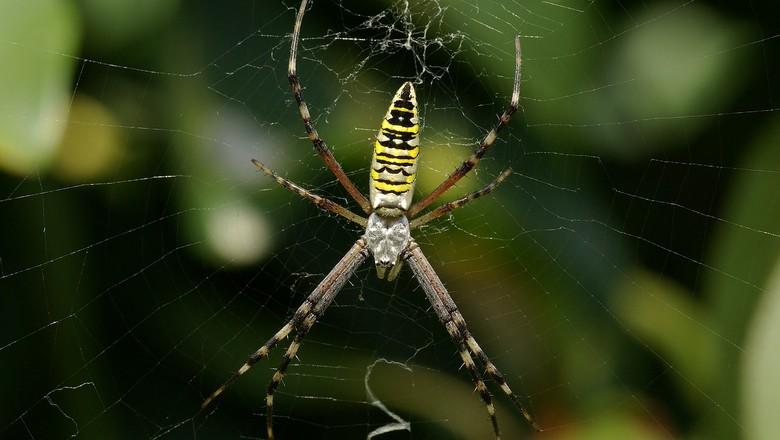spider-60623_1280 6 animais amigos da horta Perguntas ao Especialista