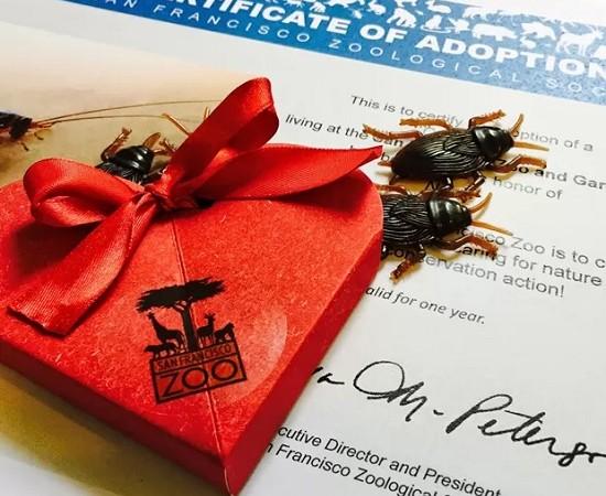 20150127101911jqHPdO5cKc-550x450 Nos EUA, zoo oferece insetos para 'homenagear' ex-parceiros Perguntas ao Especialista