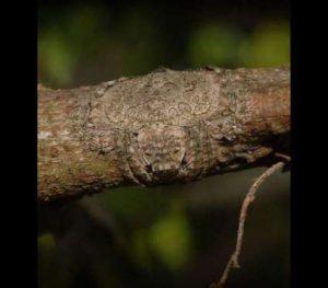 BBrtCiZ-300x263 Veja esta aranha totalmente camuflada num tronco Curiosidades Fotografia