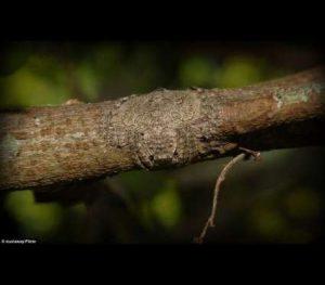 BBrtKn0-300x263 Veja esta aranha totalmente camuflada num tronco Curiosidades Fotografia