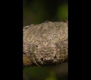 BBrtx5L-300x263 Veja esta aranha totalmente camuflada num tronco Curiosidades Fotografia