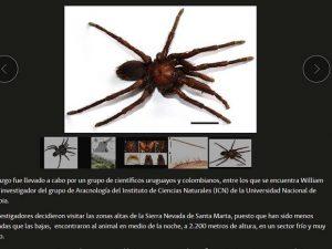 aranha-300x225 aranha