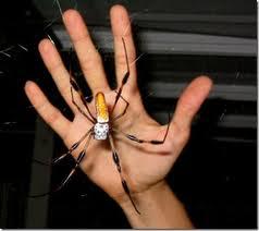 aranha-praga-dedetizadora-bh aranha-praga-dedetizadora-bh
