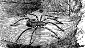 ilustracao-antiga-aranha-1470327395290_v2_750x421-2-300x168 ilustracao-antiga-aranha-1470327395290_v2_750x421