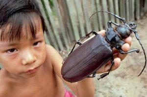 los-10-insectos-mas-atemorizantes-que-existen-9-300x197 los-10-insectos-mas-atemorizantes-que-existen-9