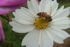 abelhas-foto-Ana-Guzzo-300x200 abelhas-foto-ana-guzzo