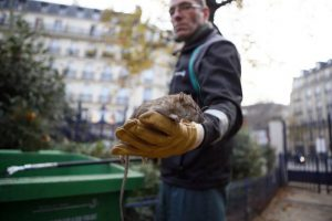 rato-rua-cidade-paris-20161209-045-300x200 rato-rua-cidade-paris-20161209-045