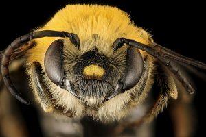 33213866224_49743a95b5_z-300x200 Os detalhes coloridos dos insetos Curiosidades Fotografia Papo de Praga