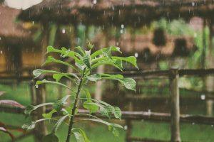 chuva_plantas-300x200 chuva_plantas