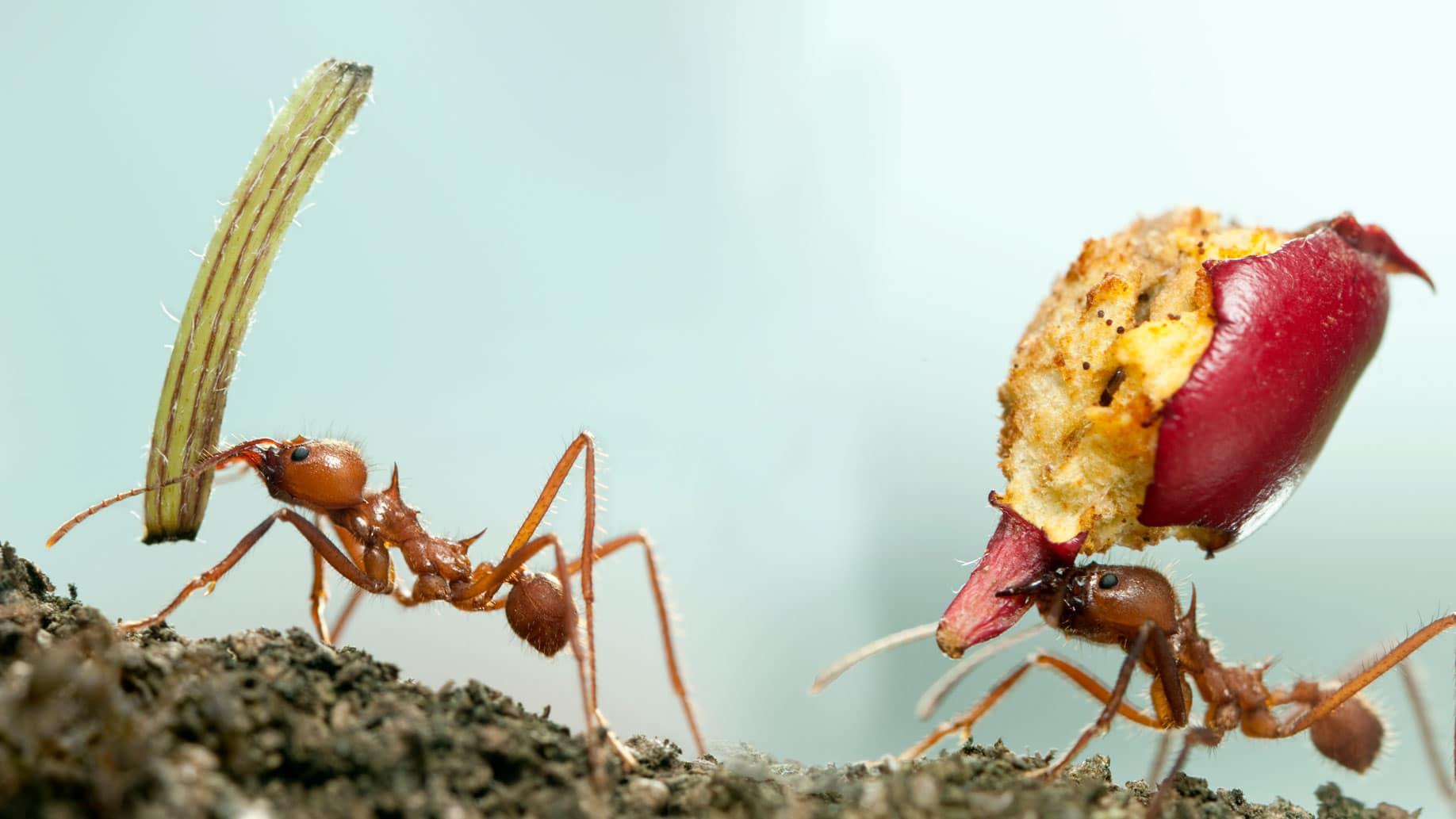 invasão de formiga aqui em casa